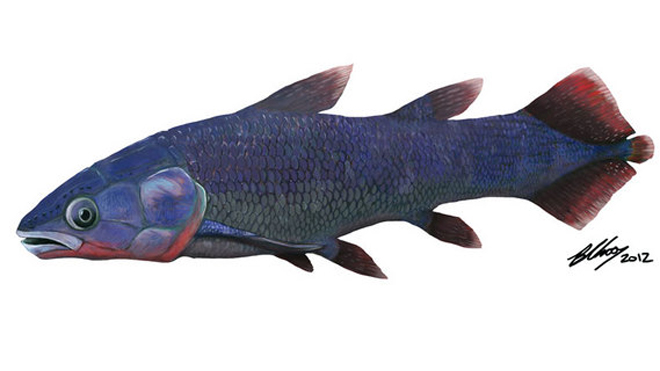 coelacanth-drawing.jpg