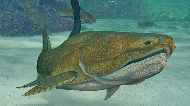 First face? Prehistoric fish was a jawdropper