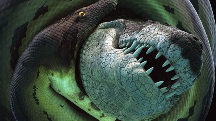 titanoboa-croc.jpg