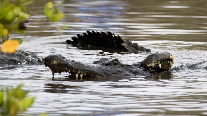 Mississippi couple sues ExxonMobile over alleged alligator infestation