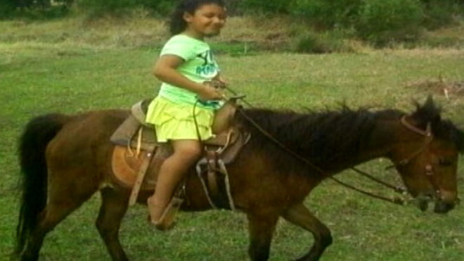 Dogs attack, kill Florida girl's miniature horse Christmas present