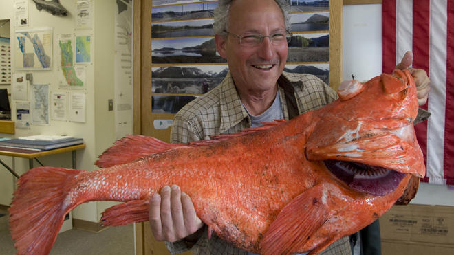 Centuries-old rockfish believed to have been caught off Alaska's coast