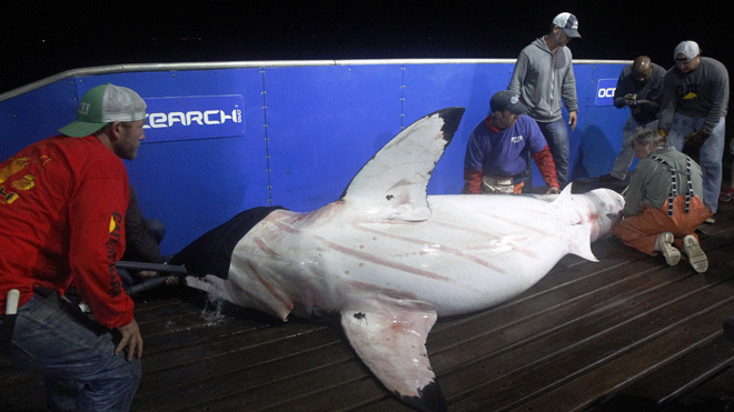 Cape Cod beach shut down after great white shark spotted