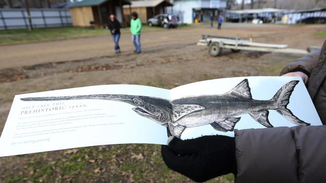 Texas lake welcomes back dinosaur-era paddlefish gone for years