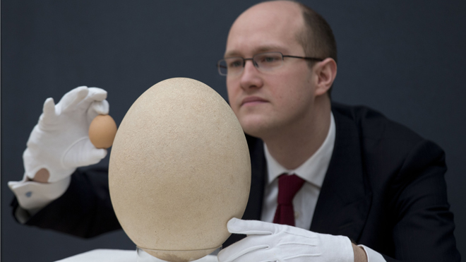Egg laid by extinct elephant bird sells for $101G at British auction