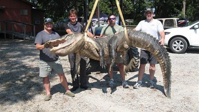 World Record Alligator