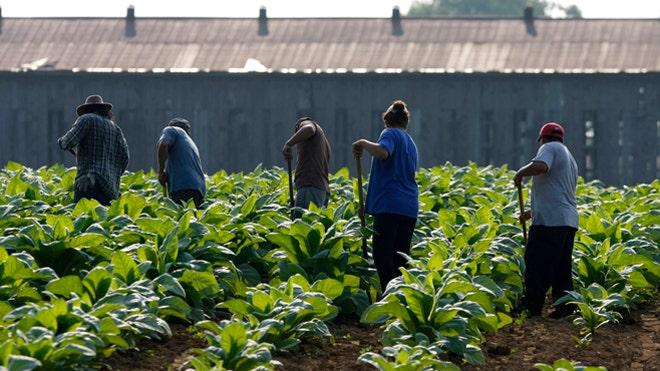 2011_US_farmworkers.jpg