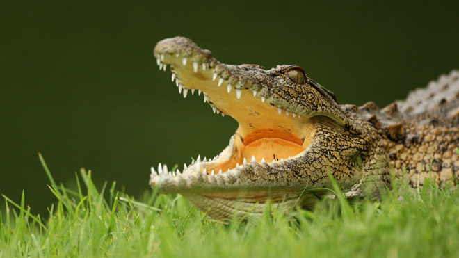 Colorado man suffers 'vicious' croc attack at Costa Rica beach resort