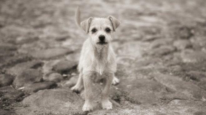 dogstory.jpg