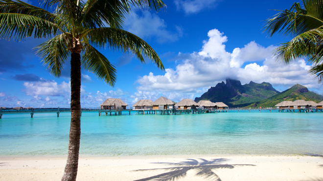 istockvacationpalmtree.jpg