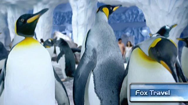 Sneak peak of SeaWorld's new Antarctica: Empire of the Penguin
