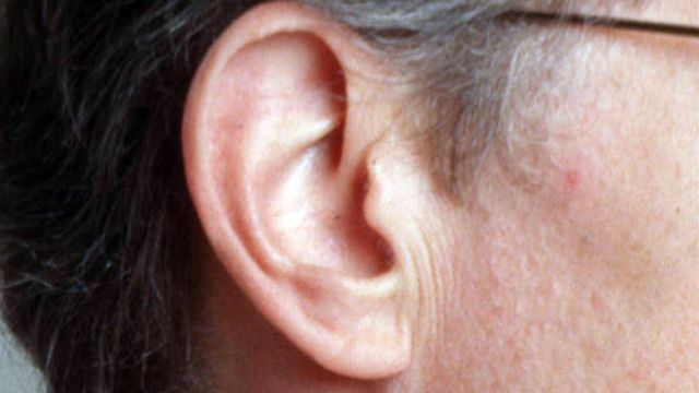 Deaf Gerbils Hear Again With Human Stem Cells Fox News