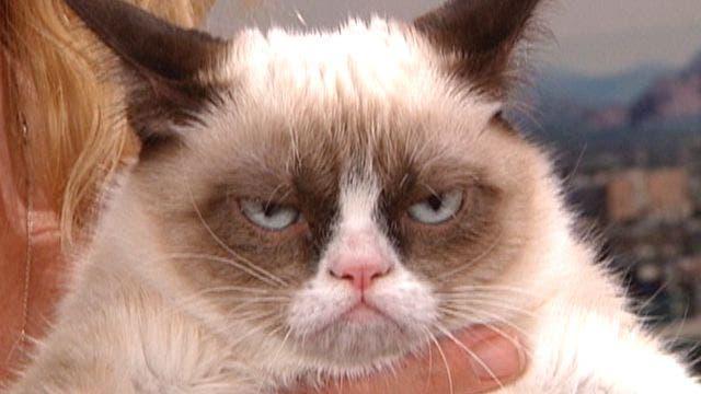 Анимация Чумачечий котенок.