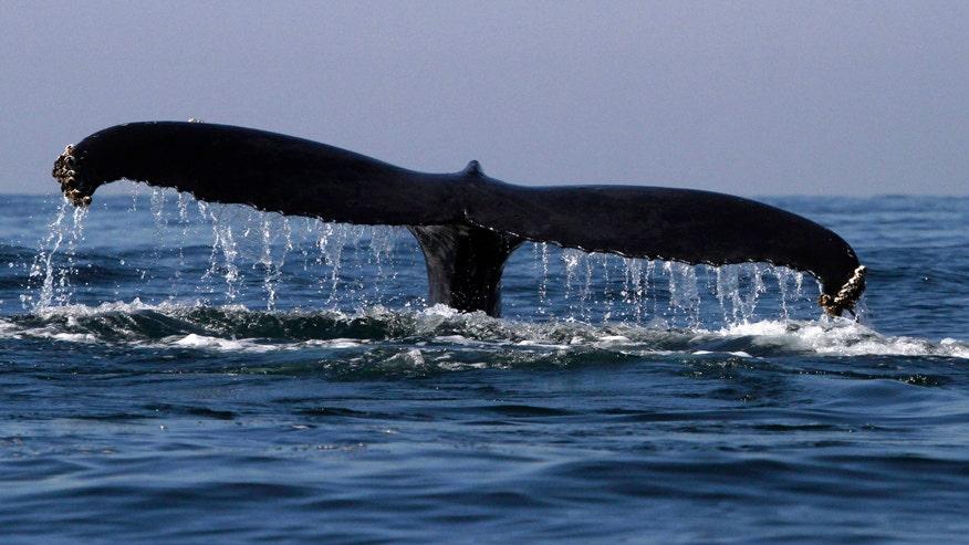 whalebaleenpic1.jpg
